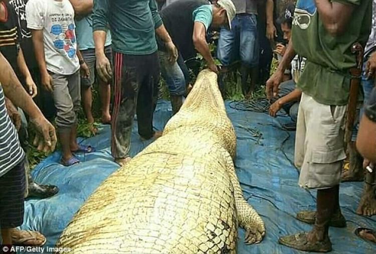 Cảnh sát bắn chết con cá sấu dài 6m gần bở sông vì nghi ngờ nó ăn thịt người đàn ông bị mất tích. Ảnh: AFP/Getty