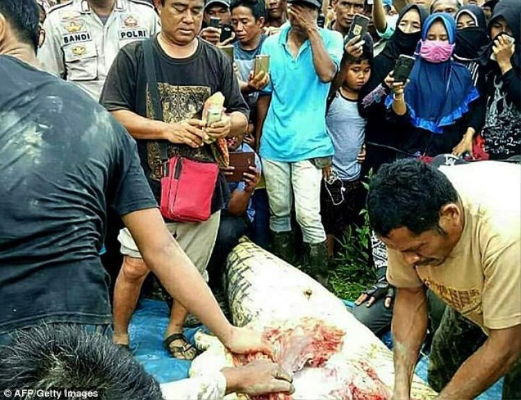 Đúng như dự đoán, tay và chân của nạn nhân xấu số được tìm thấy trong dạ dày cá sấu.Ảnh: AFP/Getty
