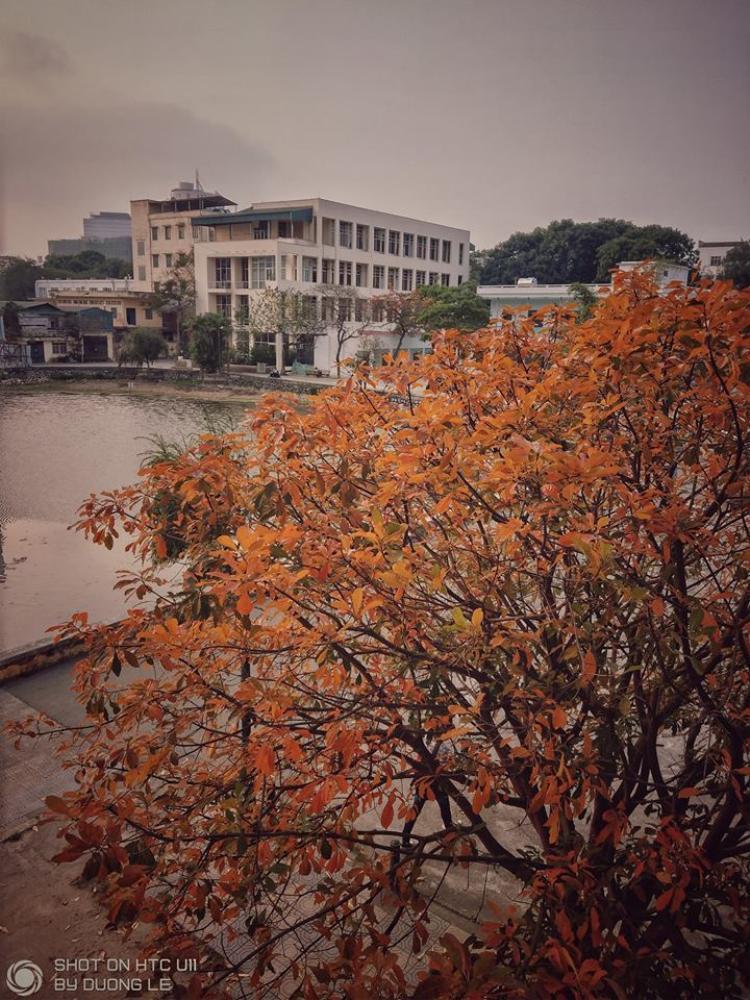 Trông như một mùa thu đang đến gần, dù bây giờ là sang xuân (Lê Minh Dương)