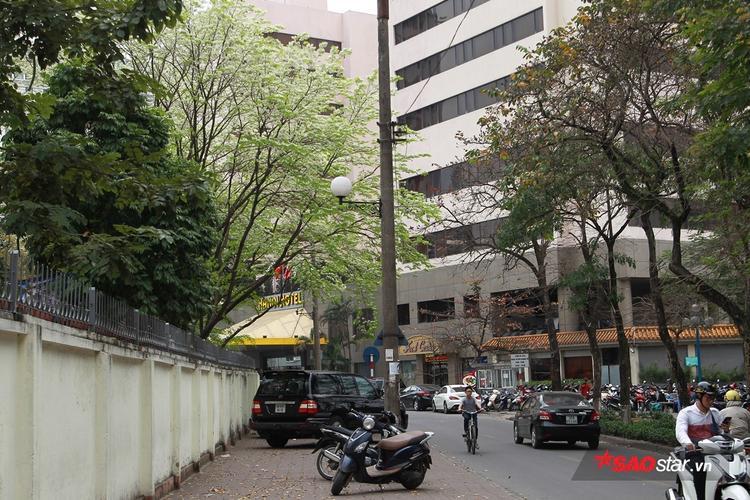 Đường phố Hà Nội mùa xuân nổi bật với màu hoa sưa.