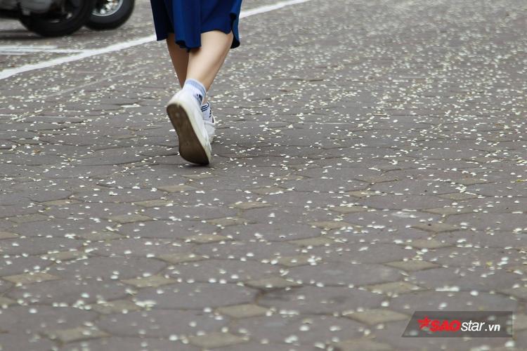 Con phố rải đầy xác hoa.