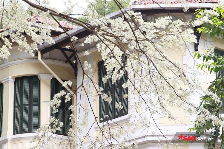 Khung cảnh thơ mộng của Hà Nội giữa những ngày xuân.