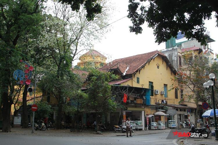 Trên phố Phan Đình Phùng cũng có nhiều sưa nhưng mọc cách nhau.