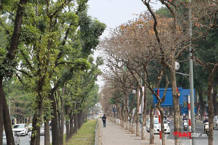 Đường Kim Mã được mệnh danh là phố đổi màu.