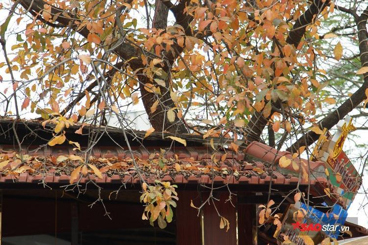 Lá vàng đỏ rụng đầy nóc nhà, phủ lên mái ngói tạo vẻ cổ kính, xưa cũ.