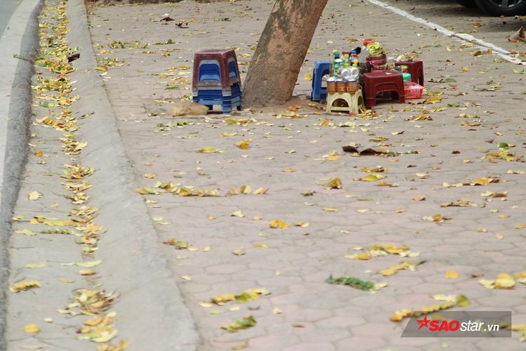 Lá rụng nhiều trải đầy đường đi.