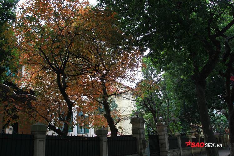 Sự đối lập màu sắc ở đường Phan Đình Phùng.