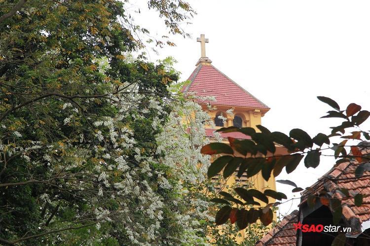 Hoa sưa nở xen giữa những cành cây màu lá vàng rực.