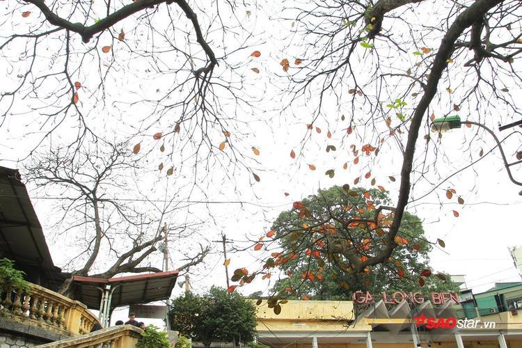 Có lẽ không khoảng thời gian nào trong năm mà đường phố Hà Nội lại mang trên mình nhiều gam màu rực rỡ đến thế!