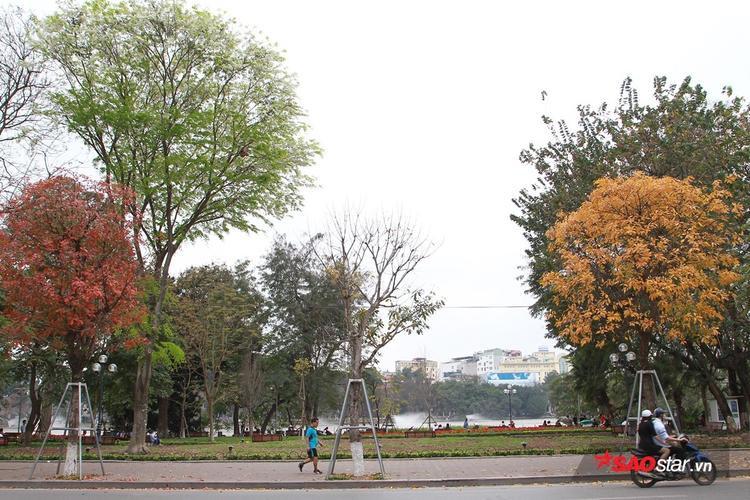 Xen kẽ với màu cây mùa thay lá là những cây sưa đang độ bung hoa trắng muốt.
