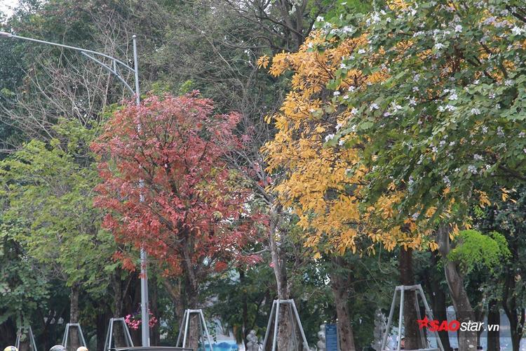 Những gam màu xanh, vàng, đỏ kế tiếp nhau.