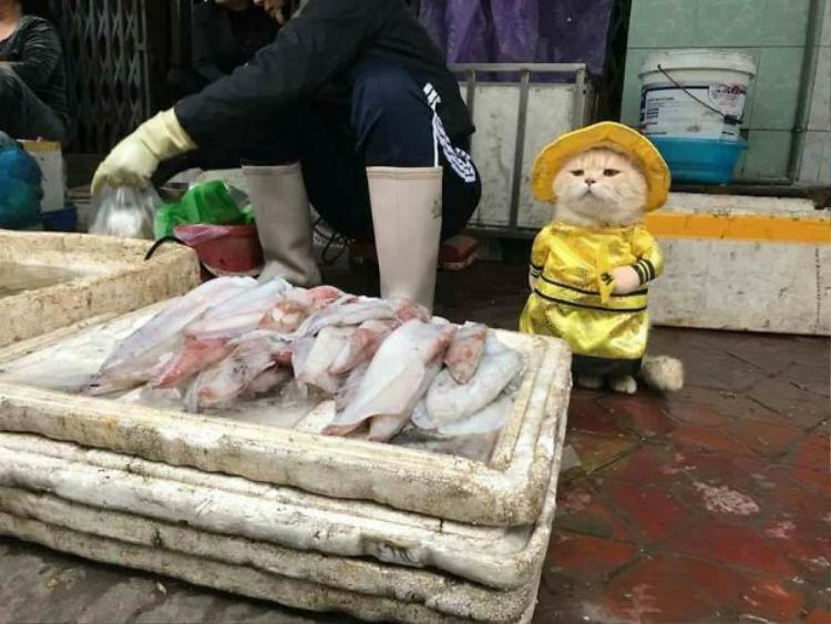 Sự xuất hiện của chú mèo với trang phục dễ thương thu hút chú ý của nhiều người đi chợ ở Hải Phòng.