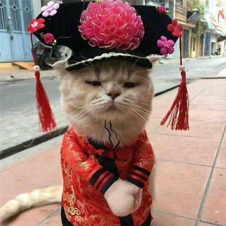 Chó đội mũ Hàm Hương xinh chưa?