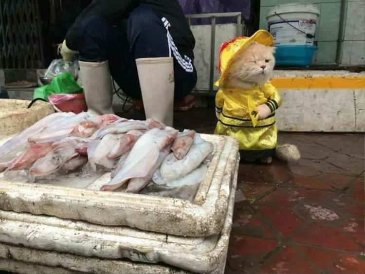 Chú mèo tên Chó đeo kính râm, mặc đồ chất lừ ở chợ Hải Phòng gây sốt trang tin nước ngoài