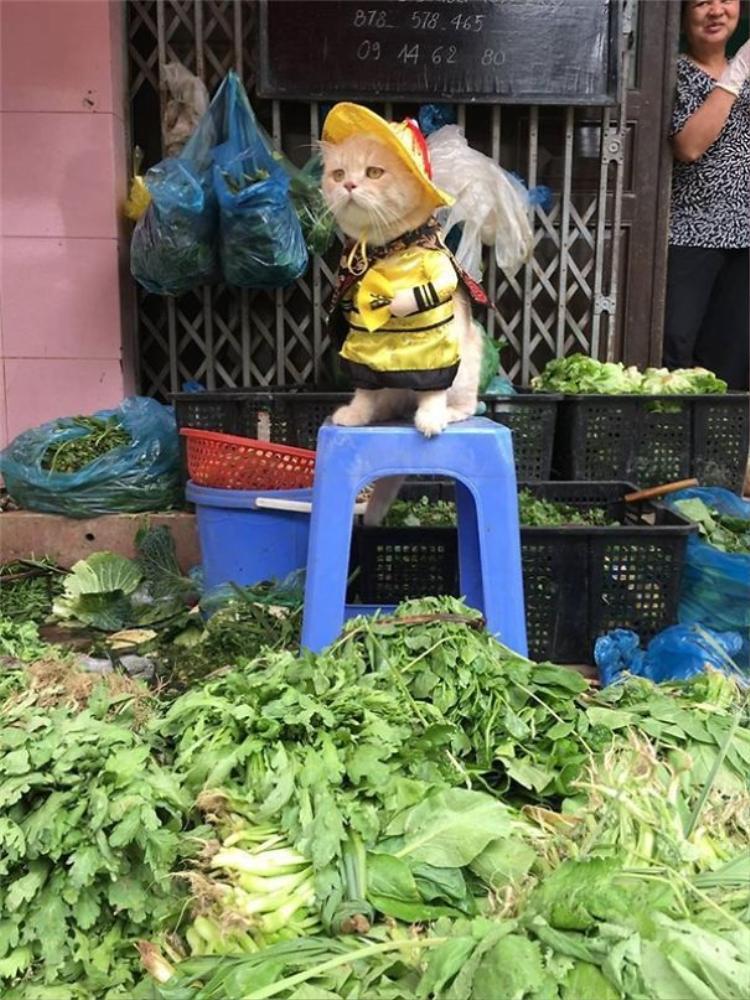 Không chỉ trông chừng cá đâu nhé, Chó còn bán rau nữa đấy!