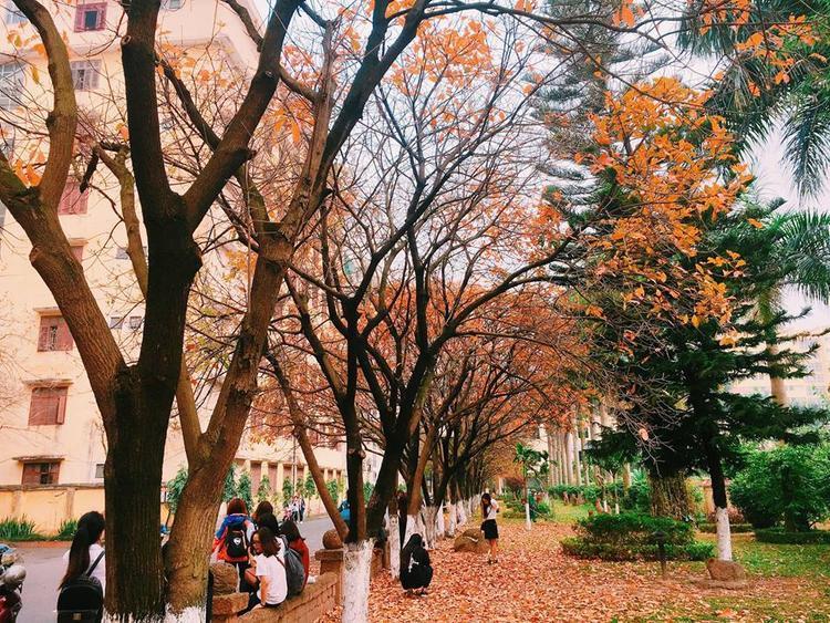 Có một con đường tình yêu đẹp hết nấc ở ĐH Sư Phạm Hà Nội trong mùa thay lá này