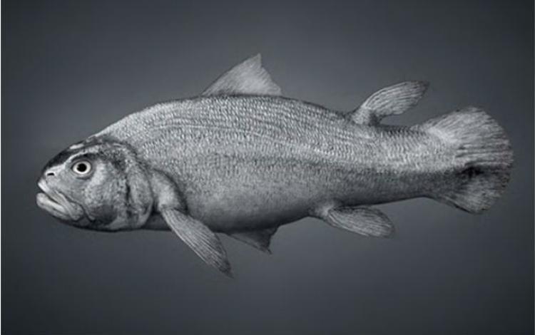 Dị tật này là phần sót lại trên cơ thể người trong quá trình tiến hóa từ loài cá.