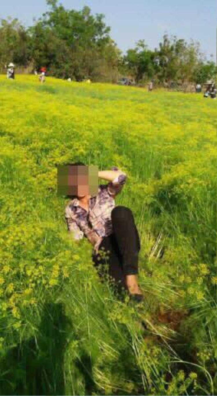 Cánh đồng hoa thì là hot nhất Ninh Thuận dập tơi tả sau 4 ngày tham quan, chủ vườn có thể sẽ không mở cửa trở lại