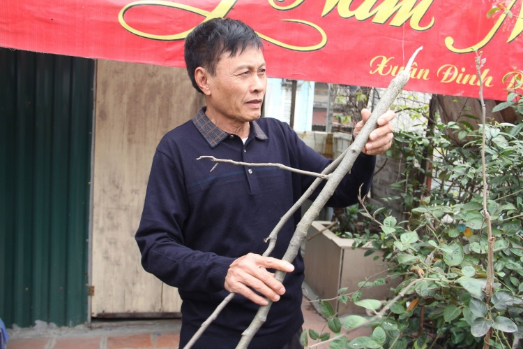 Ông Nguyễn Gia Thảo kể lại giây phút phát hiện con chim họa mi trị giá khoảng 20 triệu đồng bị khỉ hoang bắt mất.