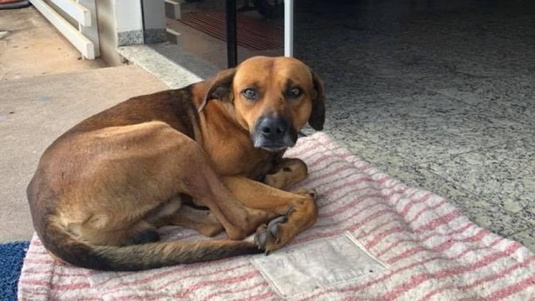 Chú chó vô danh chờ đợi người chủ quá cố trước cửa bệnh viện suốt nhiều tháng trời. Ành: Cristine Sardella