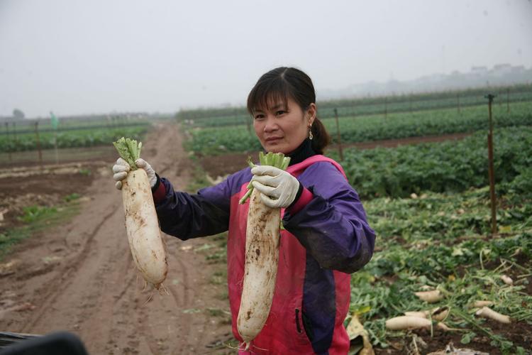 Chị Tuyết cầm trên tay củ cải nặng hơn 2kg.