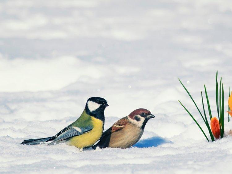 """Bố mẹ Bill tặng cho đôi vợ chồng trẻ một cặp chim điêu khắc và nhìn chằm chằm về phía chân trời với nguyện vọng mong hai con sẽ mãi nhìn chung một hướng. """"Đến giờ, đôi chim vẫn ở phía trước nhà chúng tôi"""", Malinda viết trong lá thư năm 2018 của cặp vợ chồng."""