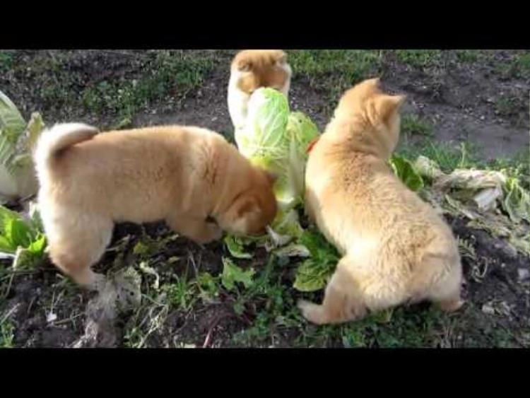 Thích ăn rau mà không cho nên rủ đồng đội đi ăn vậy!
