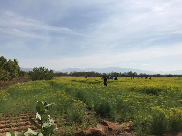 Vườn hoa thì là xinh xắn ở Ninh Thuận đã mở cửa đón khách trở lại với mức phạt nghiêm khắc!