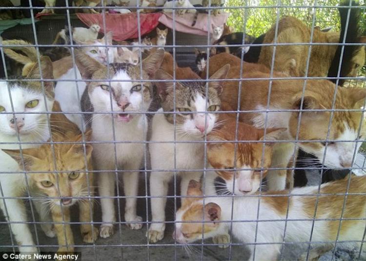 Hình ảnh những chú mèo bị bắt nhốt đợi làm thịt khiến nhiều người ám ảnh. Ảnh: Caters News Agency