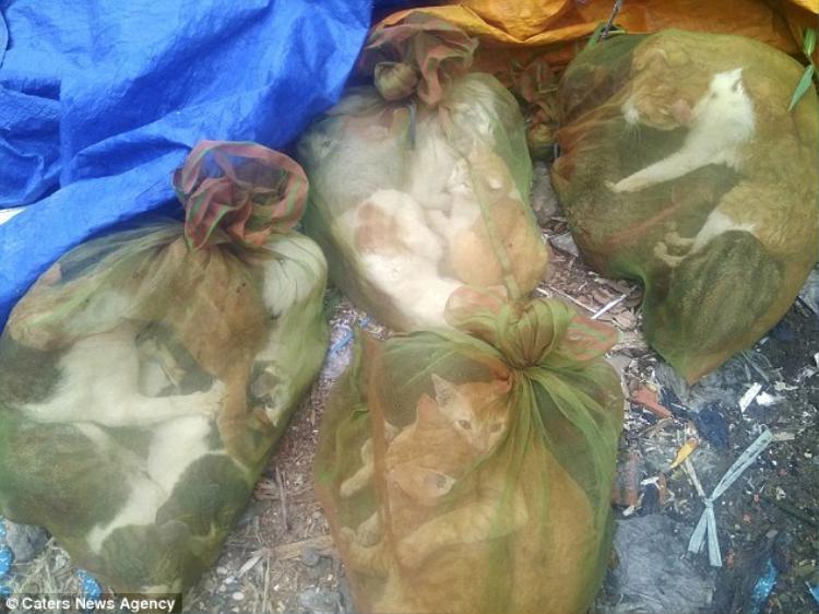 Những chú mèo bị bắt cóc rồi bỏ vào trong túi như những món hàng hóa vô tri. Ảnh: Caters News Agency
