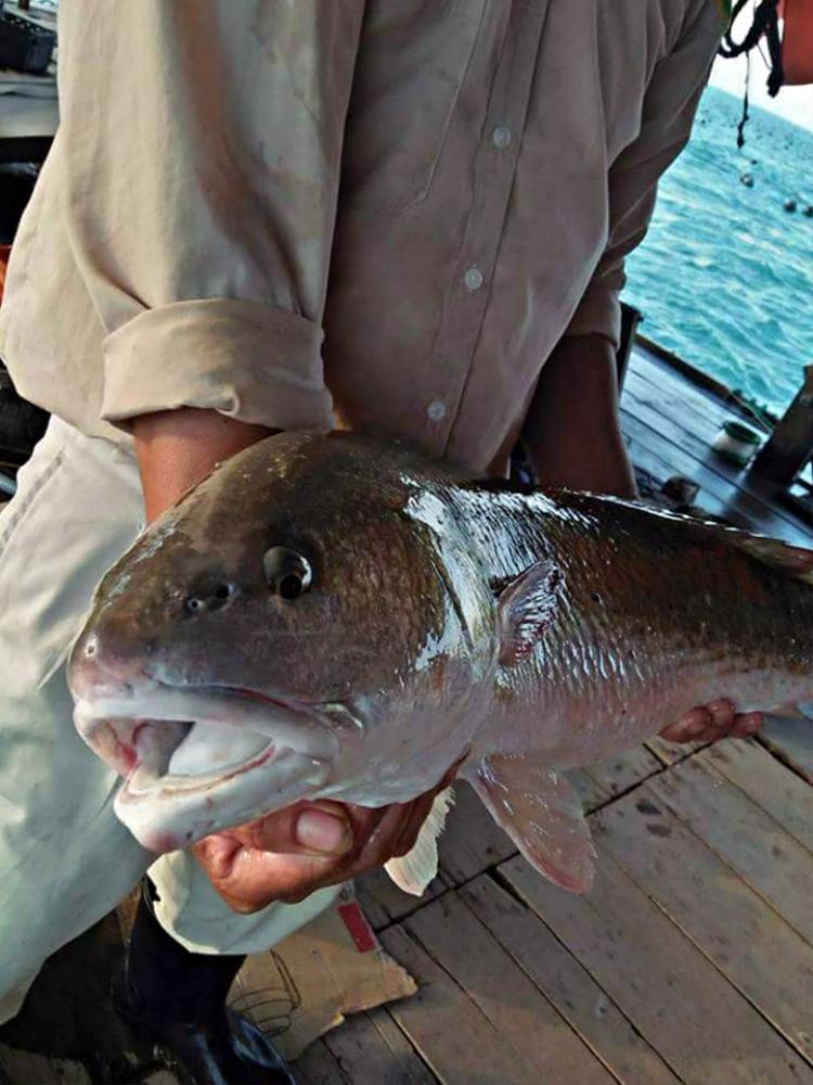 Con cá có đặc điểm miệng rộng, màu vàng nghệ…