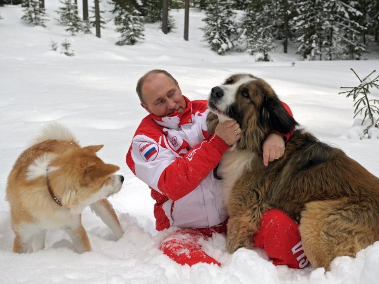 Tổng thống Putin là một người yêu động vật. Hiện ông sở hữu một chú chó săn màu đen Labrador tên Konni, một chú chó Akita Inu tên Yume và một chú chó Karakachan tên Buffy.