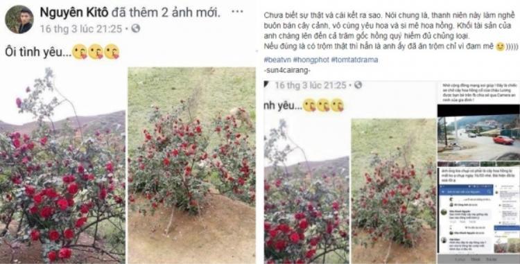 Cư dân mạng ném đá Nguyên Kitô vì nghi ngờ anh là người ăn cắp cây hoa hồng cổ và khoe trên trang cá nhân.