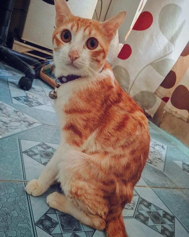 Hình ảnh chú mèo hiện tại.