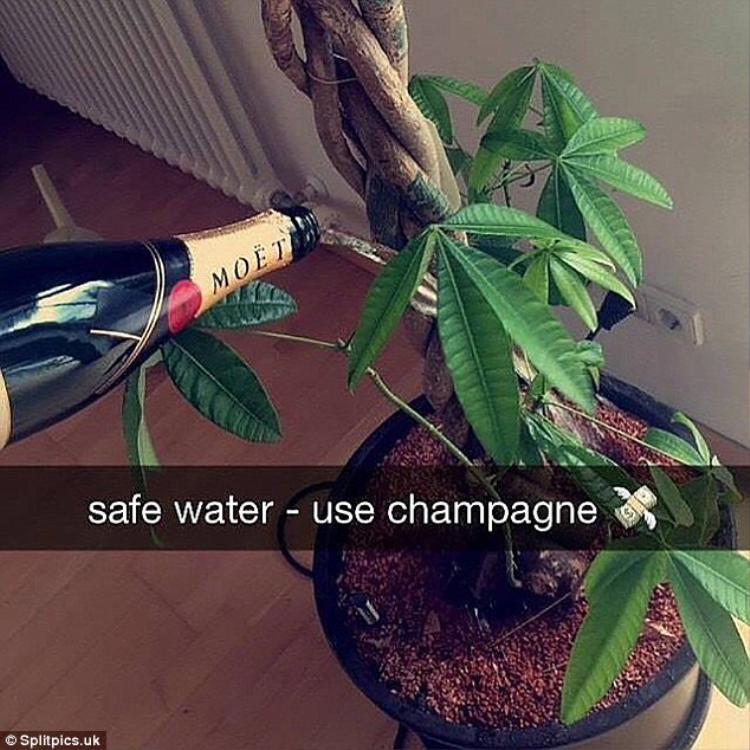 Dành tình yêu cho cây cối, thiếu niên nhà giàu không ngại mang rượu đắt tiền ra tưới cây. Đúng là người ăn không hết kẻ lần chẳng ra!Ảnh: Splitpics.uk