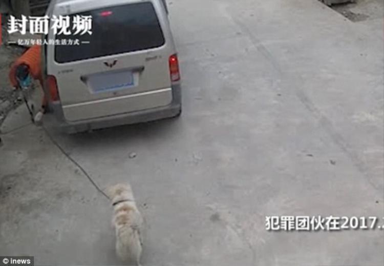 Cẩu tặc ngang nhiên trộm chó giữa ban ngày. Ảnh Inews