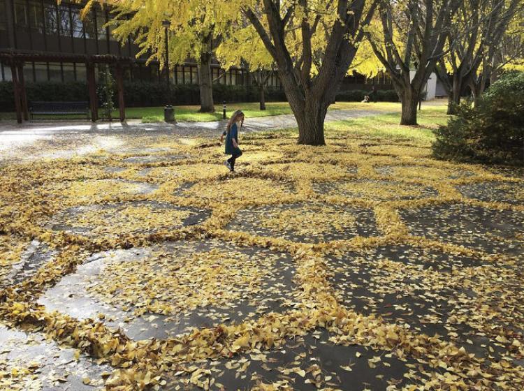 Những tác phẩm đều được sắp xếp một cách tỉ mỉ, đầy nghệ thuật từ lá cây.