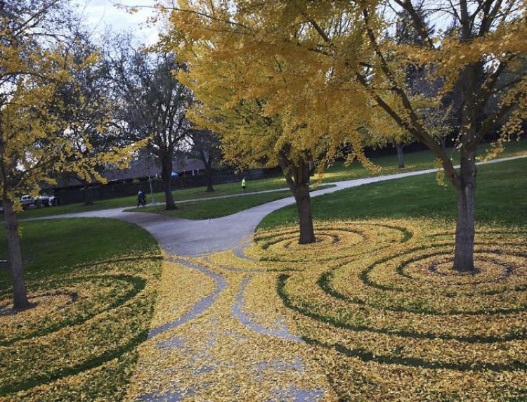 Hàng năm vào mùa thu, khuôn viên trường đại học này sẽ được phủ kín bởi những kiệt tác của Hedrick.