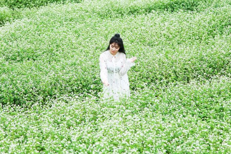 Được biết, cánh đồng hoa này được chủ vườn tính toán gieo hạt muộn hơn nhiều tháng so với mùa hoa tam giác mạch ở các nơi khác