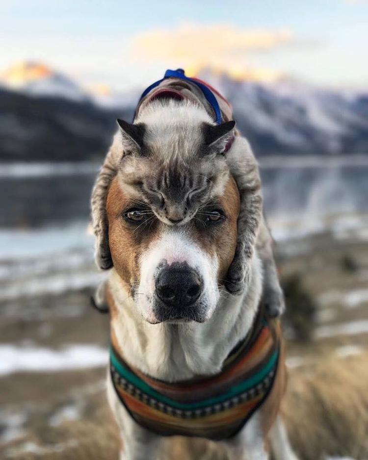 Không ngờ chó và mèo lại thân thiết, thậm chí còn đi phượt chung, có ảnh chung đẹp như thế này!