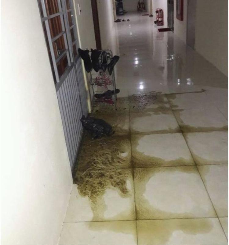 Chất thải tràn lênh láng khắp tầng chung cư.