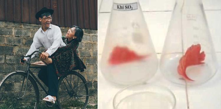 Xe đạp tróc sơn và thí nghiệm làm mất màu cánh hoa hồng?