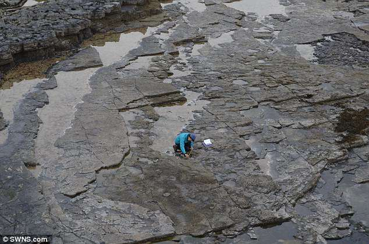 Các nhà khoa học rất thận trọng chụp ảnh và phân tích các vết chân ở những khu vực xảy ra thủy triều. Ảnh: SWNS
