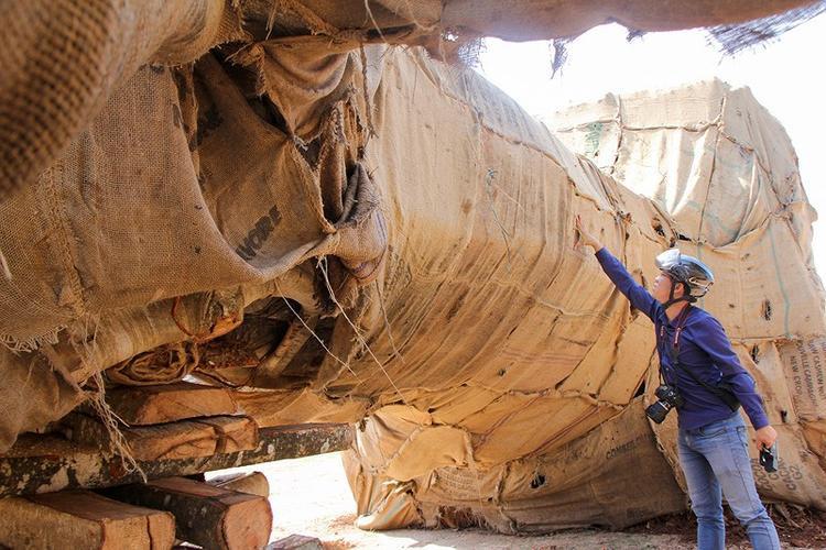 Ba cây vẫn đang được cơ quan chức năng xác minh nguồn gốc. Ảnh: Do Nguyễn.