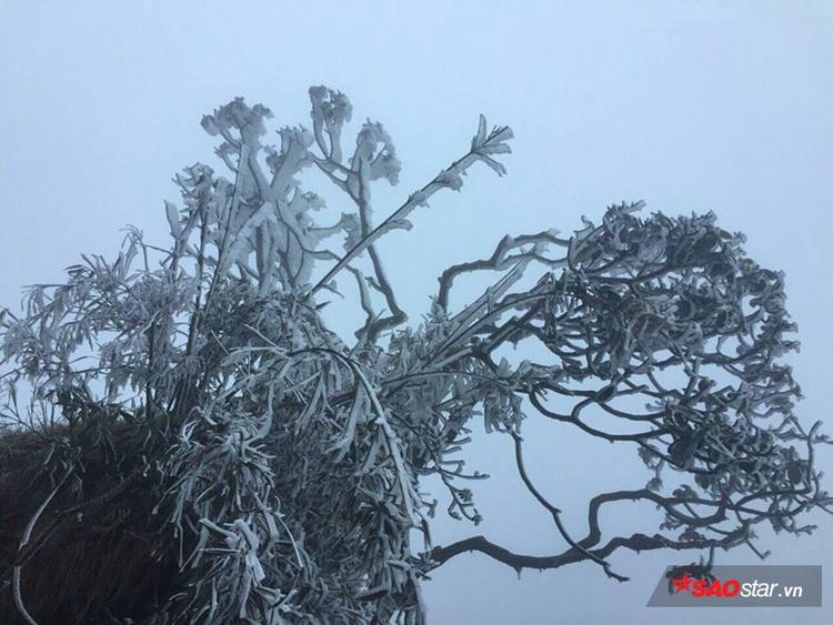Băng phủ nặng trĩu trên các cành cây.