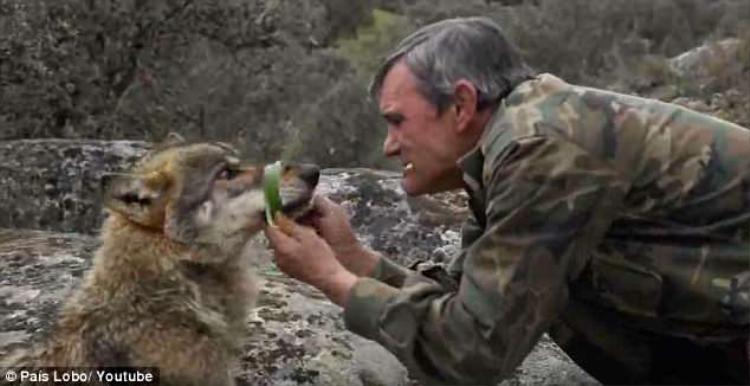 Quãng thời gian sống cùng sói lànhững ngày tháng hạnh phúc nhất cuộc đời ôngPantoja .