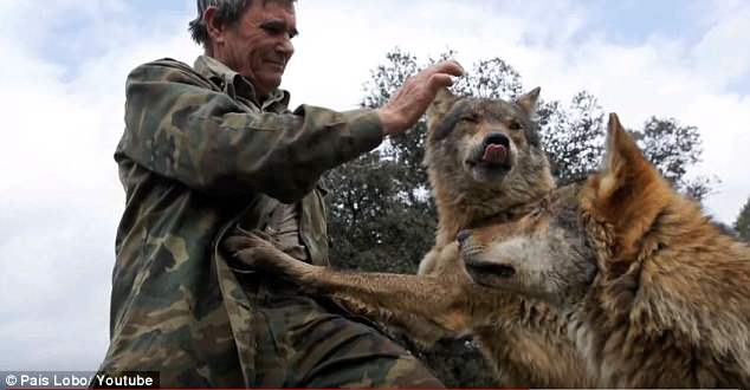 Chỉ có sói mới là gia đình của ông.