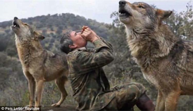 Pantojavẫn có thể hú được như sói.