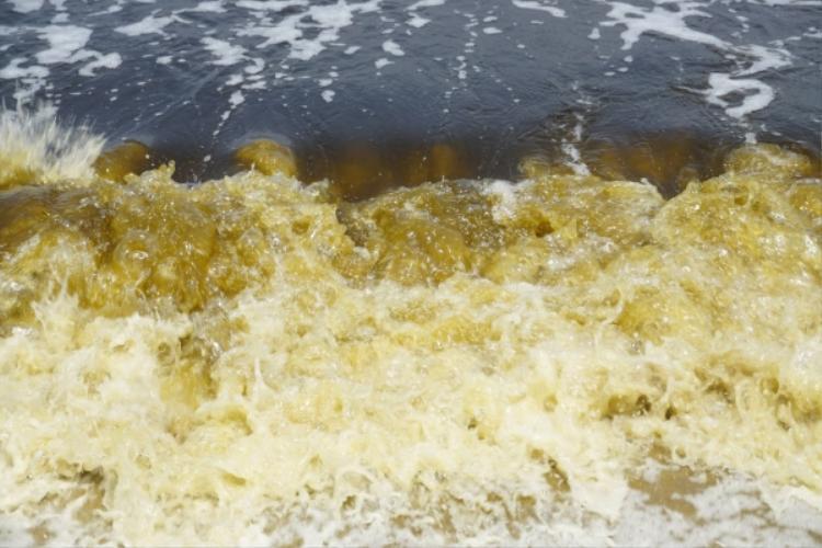 Kết luận vụ nước biển đổi màu bất thường kèm mùi hôi ở Đà Nẵng