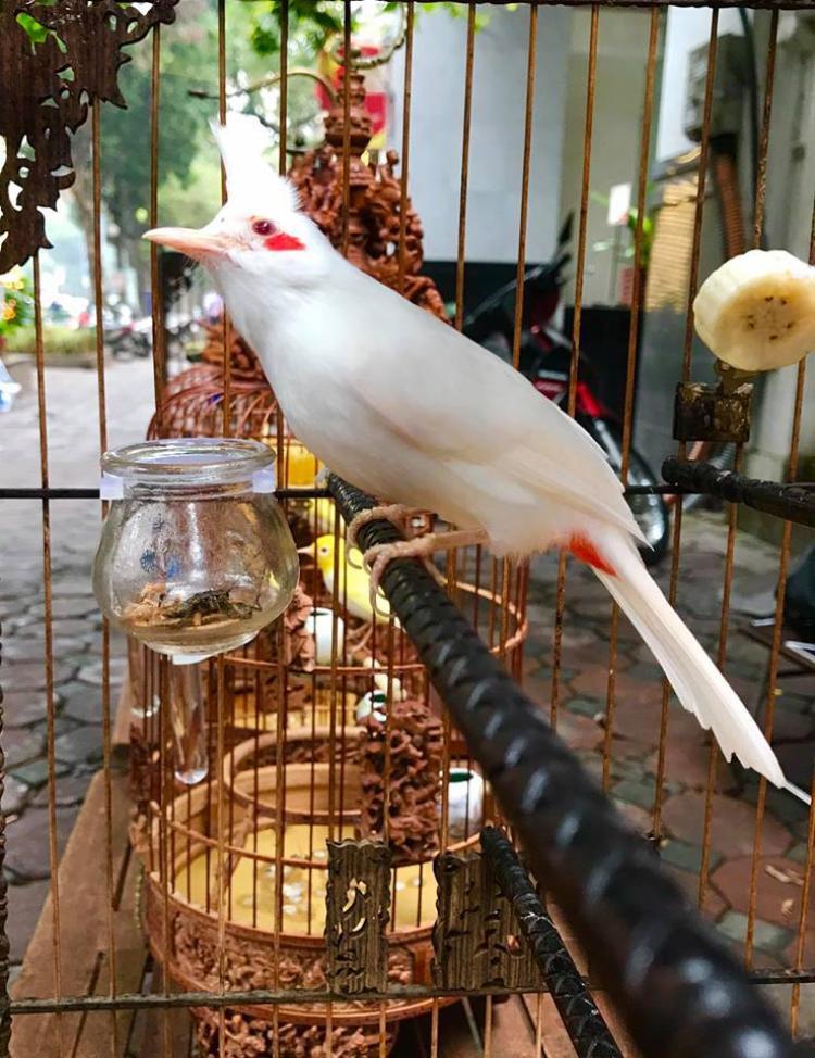 """Hằng ngày các chú chim được ăn thức ăn riêng, có """"bảo mẫu"""" chăm sóc và được nằm điều hoà."""